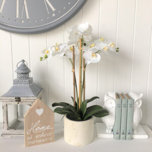 Large Orchid in White Cement Pot
