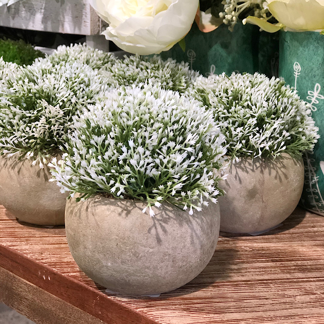 Topiary Plant Mini Potted White Flowers Humble Home